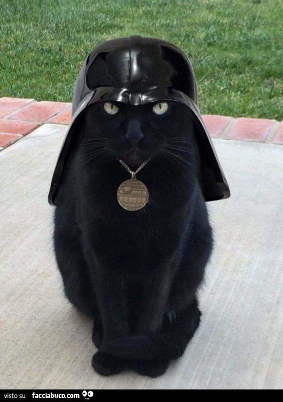 Gatto Nero Con Cappello Di Dart Vader Facciabucocom