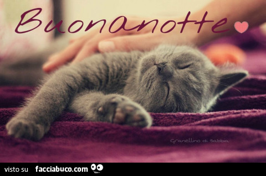Gatto Grigio Addormentato Buonanotte Facciabuco Com
