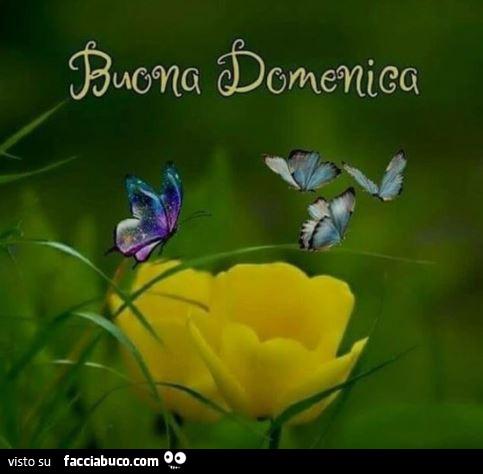 Farfalle Sui Fiori Buona Domenica Facciabuco Com