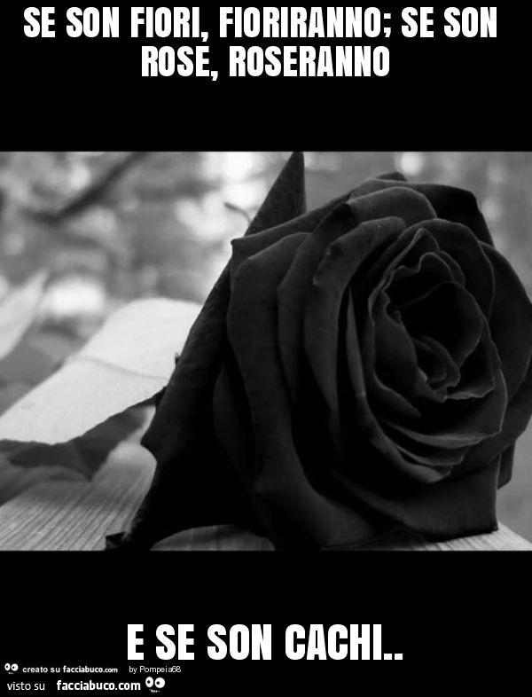 Se Son Fiori Fioriranno Se Son Rose Roseranno E Se Son Cachi Facciabuco Com