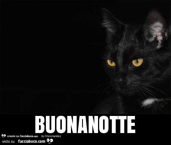 Gatto Nero Buonanotte Facciabucocom