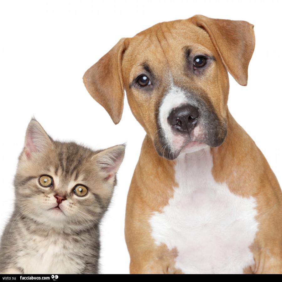 Buongiorno Cani E Gatti Images