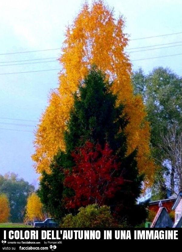 Tutti i meme sui colori - Immagine dell albero a colori ...